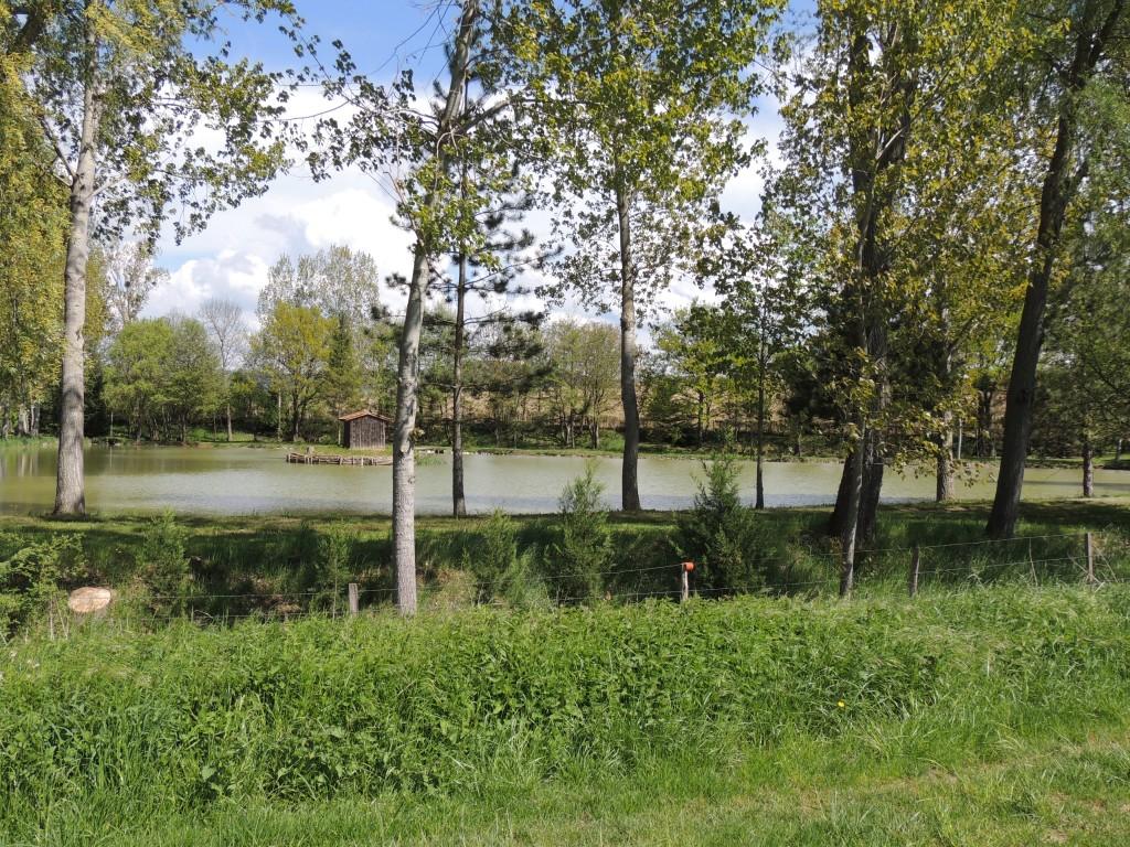 Saint-Martin-des-Plains 13