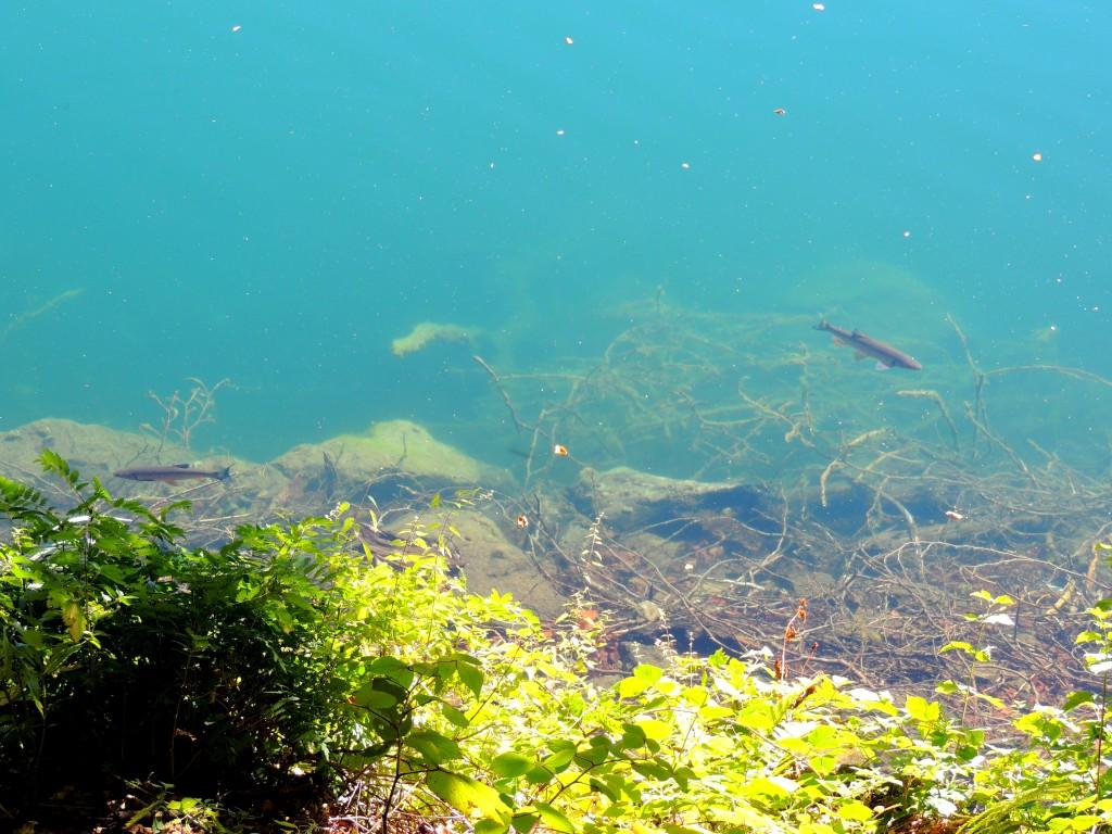 Lac Pavin 11