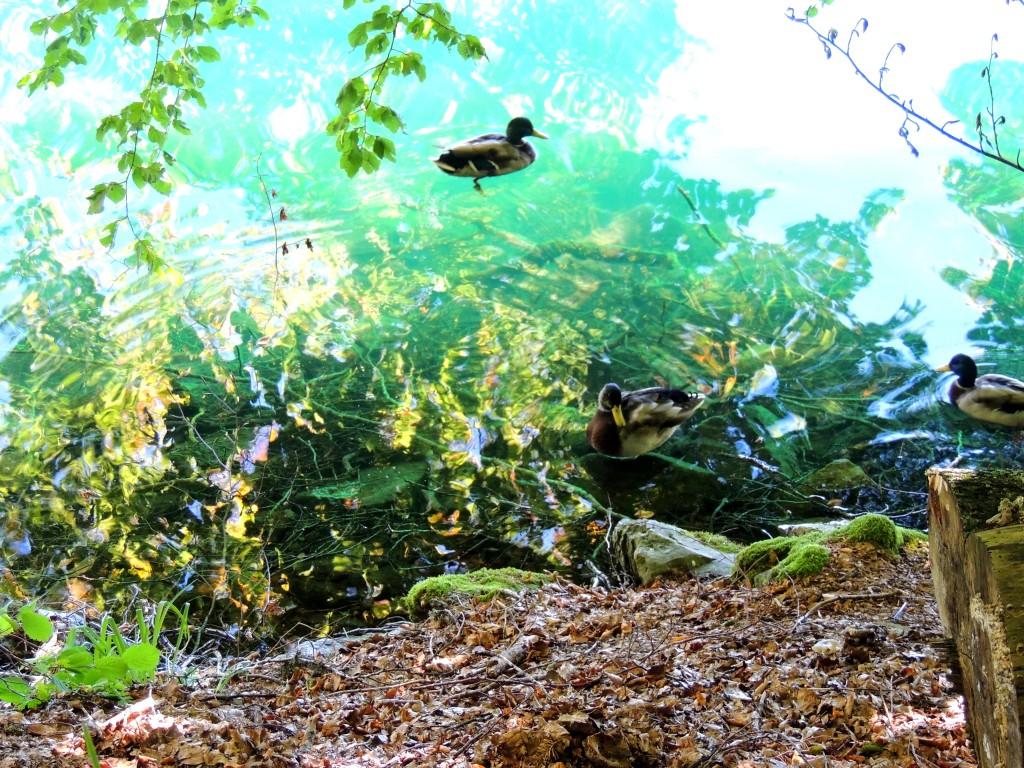 Lac Pavin 12
