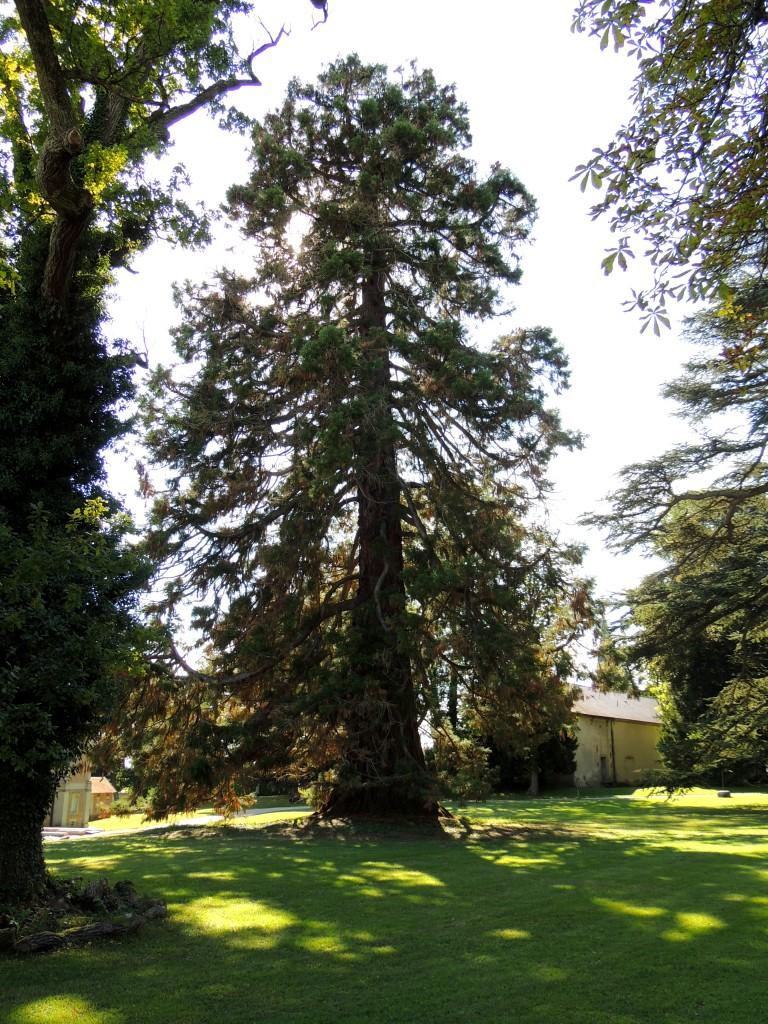 Domaine Royal Randan 97